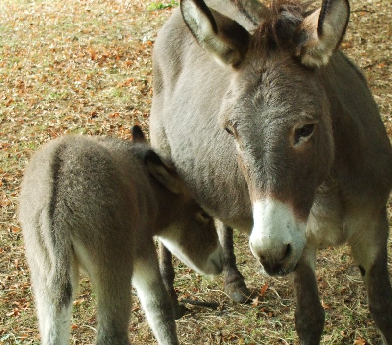 Muttertier Dolores mit Fohlen Fabiana