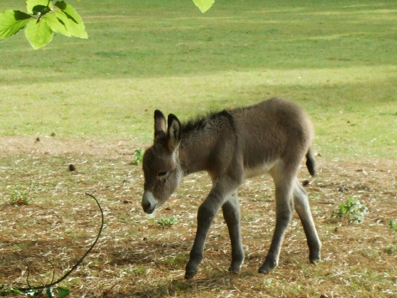 Das Eselsfohlen aus dem Tierpark Köln-Lindenthal