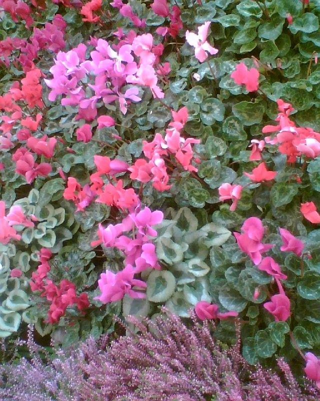 Herbstblumen erweisen sich dagegen als eine wahre Pracht