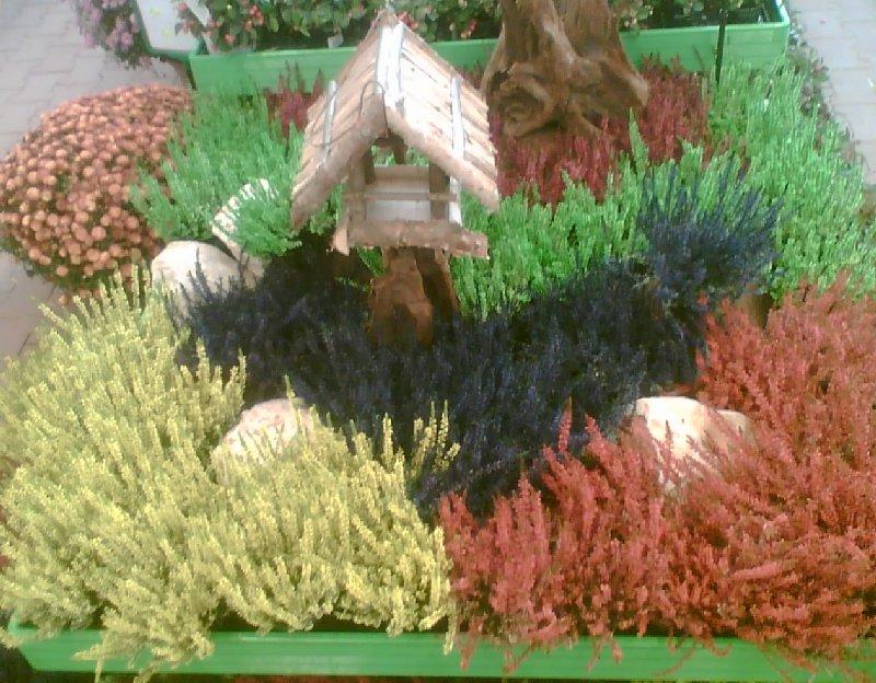 Gefärbte Heide erweist sich dagegen eher als Beschiss