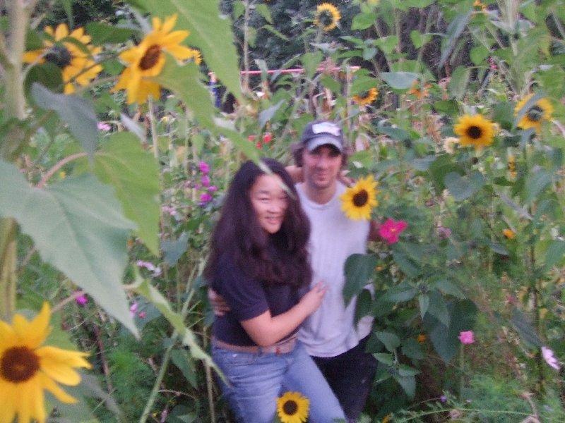 Hey-Jin und Christian zwischen Sonnenblumen