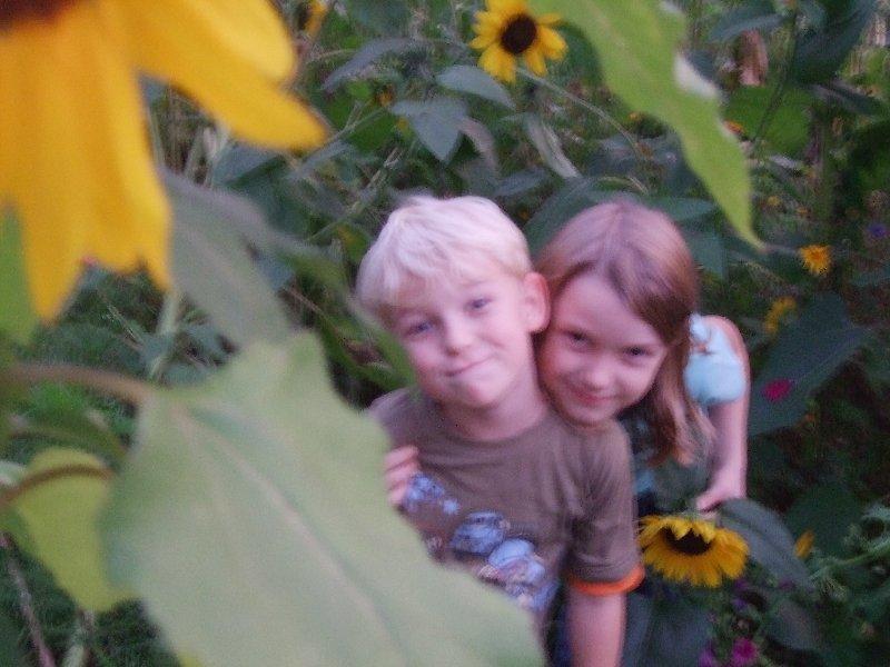 Die Kinder zwischen Sonnenblumen