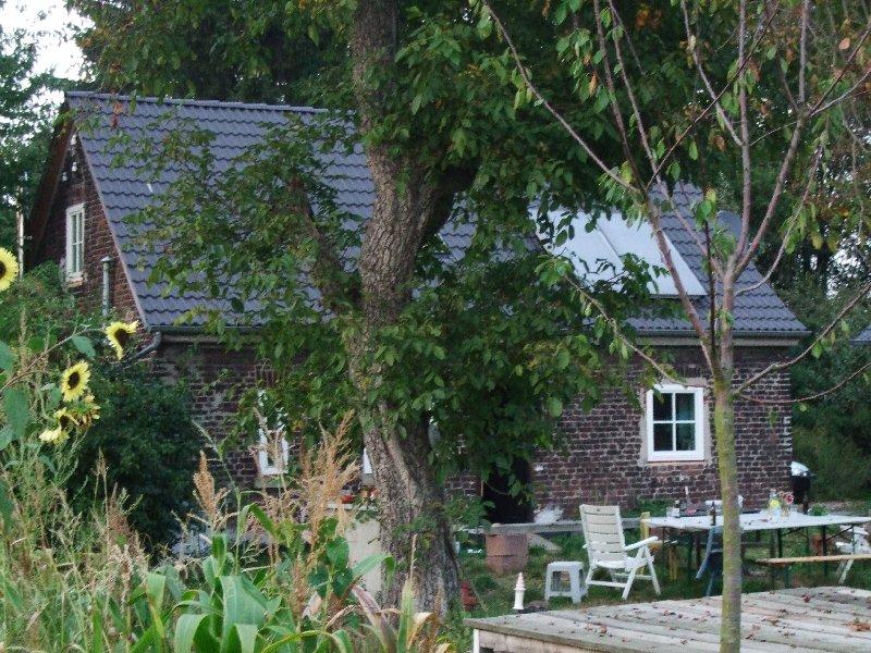 Der Nussbaum hinterm Haus brignt reiche Walnussernte