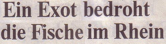 Welt, 04.05.10, Titel: Ein Exot bedroht die Fische im Rhein