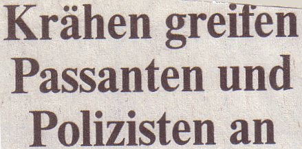 Die Welt, 28.05.2010, Titel: Krähen greifen Passanten an