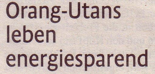 Kölner Stadt-Anzeiger, 07.08.10, Titel: Orang-Utans leben energiesparend