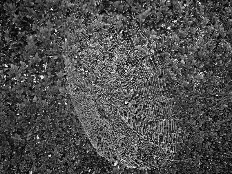 Spinnennetze kündigen den Altweibersommer an