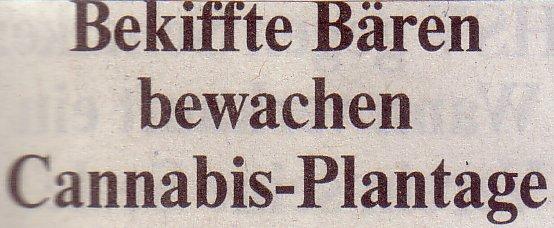 Die Welt, 21.08.2010: Bekiffte Bären bewachen Cannabis-Plantage
