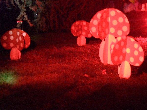 Beleuchtete Pilze bei Halloween im Kölner Zoo