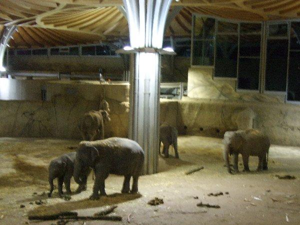 Eines der Prunkstücke des Kölner Zoss, das Elefantenhaus in der Halloween-Nacht