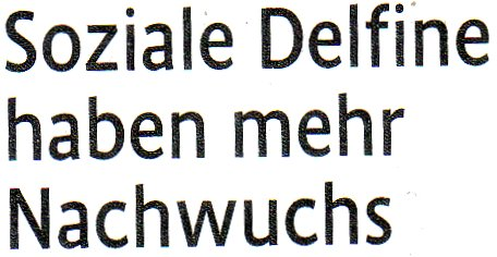 Kölner Stadt-Anzeiger, 06.11.10, Titel: Soziale Delfine haben mehr Nachwuchs