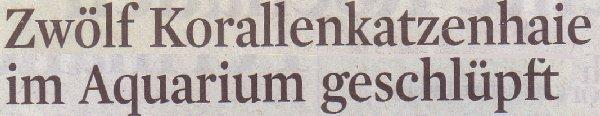 Kölner Stadt-Anzeiger, 19.11.10, Titel: Zwölf Korallenkatzenhaie im Aquarium geschlüpft