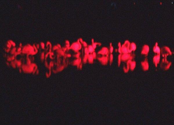 Schwimmende Flamingos bei Nacht