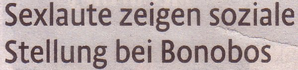 Kölner Stadt-Anzeiger, 01.03.2011, Titel: Sexlaute zeigen soziale Stellung bei Bonobos