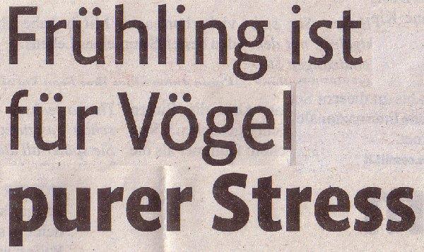 Kölner Stadt-Anzeiger, 16.04.2011, Titel: Frühling ist für Vögel purer Stress
