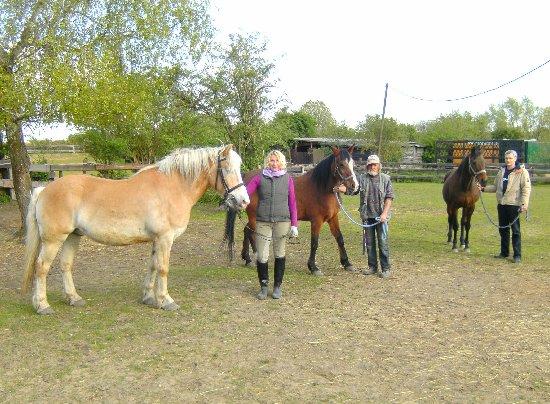 Drei Tiere des Kölner Pferdeschutzhofs im Bezirk Nippes